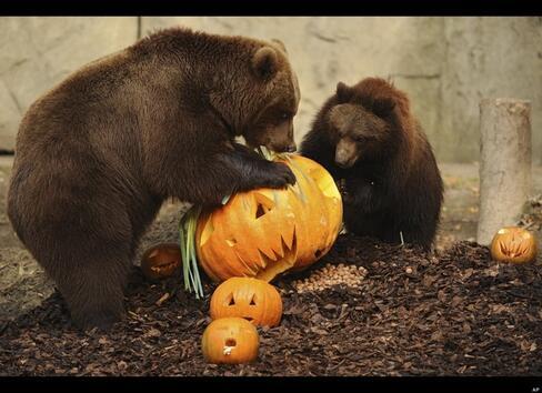 Умореното его: Гладна мечка хоро не играе