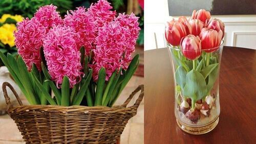 Икономични хитринки за пролетно освежаване на дома