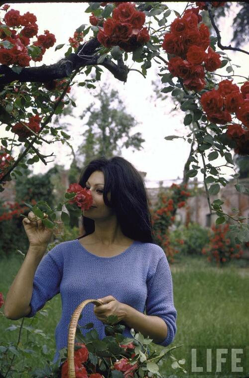 София Лорен - една красива умница, познала нищетата и разкоша