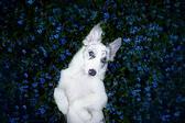 Красиви кадри на кучета, улавящи душата на най-добрия приятел на човека!