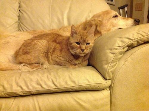 Това куче изгуби своята котка заради рак, но получи нов приятел