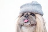 Уникални имена за женски кученца, които определено не сте чували в парка