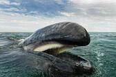 Красотата на китовете и делфините