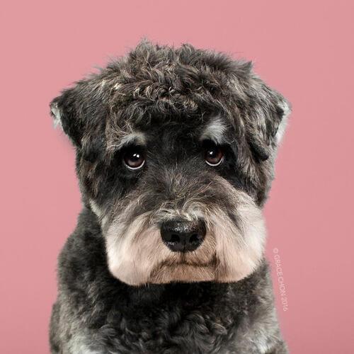 Кучета преди и след фризьор