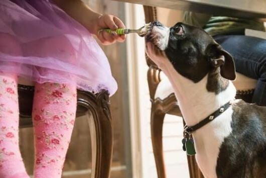 Плодове, зеленчуци и други храни, които спокойно можете да споделяте с кучето си