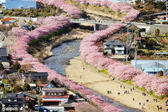 <p>Пролетта дойде по-рано в японския град Кавацу. Малкият град, разположен точно до Токио, е известен със своите 8000 черешови дървета, които цъфтят много рано всяка година. Дръвчетата правят този град едно много романтично място. Черешовите цветове са символични за Япония и я превръщат в много розово, красиво място.</p>