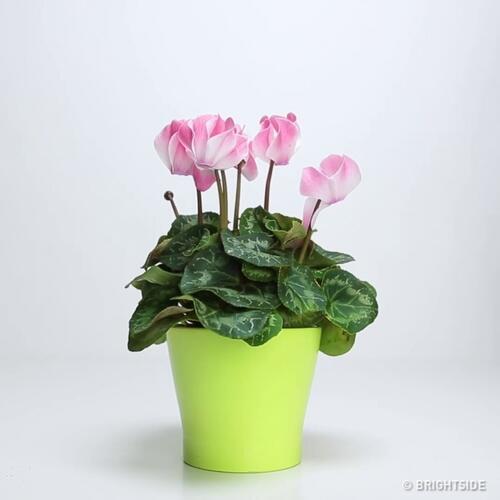 Три съставки, които ще върнат растенията ви към живота