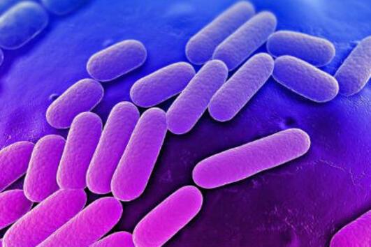 BacteFort - Изчистете невидимите паразити от тялото си сега!