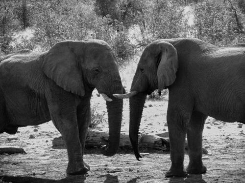 12 очарователни факти за животни, които не бихте повярвали, че са истина
