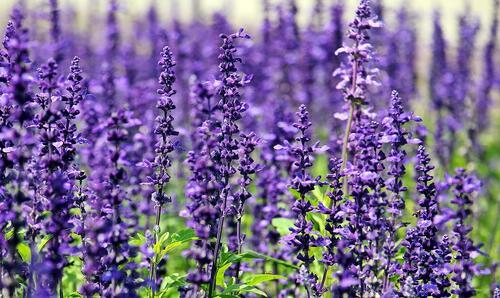 5 растения, които ще ви помогнат да спите по-добре