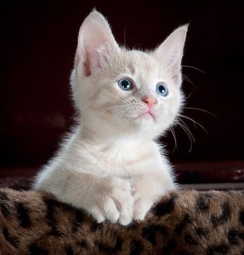 Как и къде да галите котката си според учените