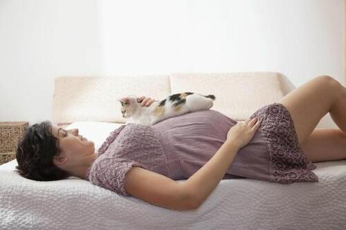Как да се предпазите от токсоплазмоза по време на бременността, ако имате котка