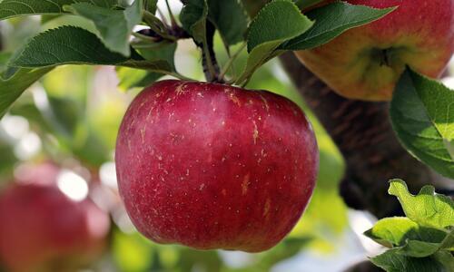 9 плода, които подпомагат отслабването