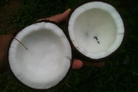 Може ли кокосовото масло да ви помогне да отслабнете?