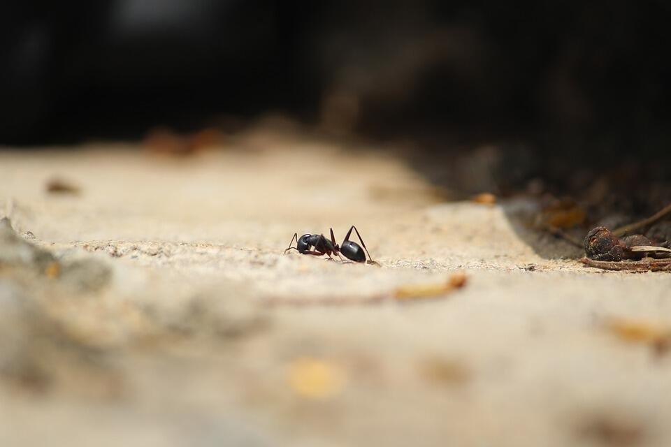 Изключително лесно е да се отървете от досадните насекоми с