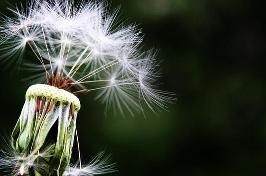 Алергията – проблем за теб?