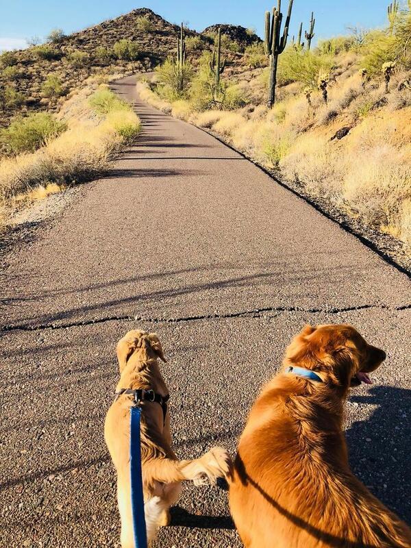 Куче-герой спасява собственичката си от опасна змия