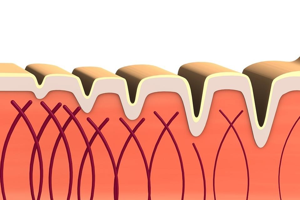 Колагенът е основният структурен протеин в различните съединителни тъкани в