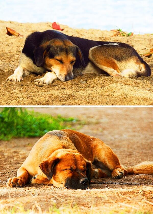Какво казва позата на съня за вашето куче