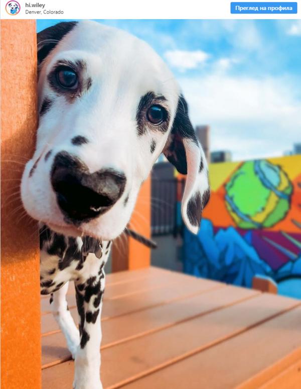 23 причини, поради които кучетата са най-хубавото нещо на този свят