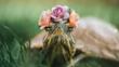 Запознайте се със Squishy и Rosy: Две очарователни костенурки, които превземат Instagram