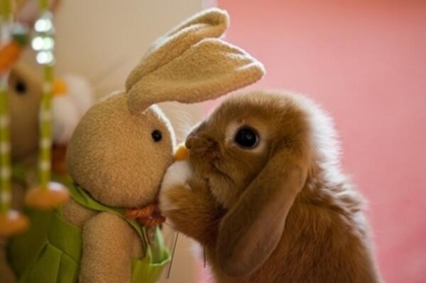 Откога зайците снасят яйца?