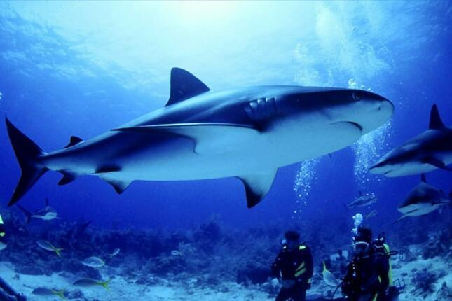 Сафари с акули