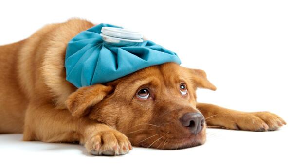 Първи ден от настинката